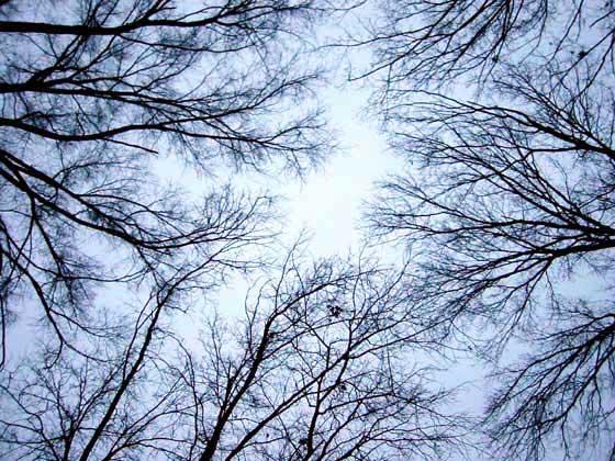http://www.mercurylines.com/trees.html