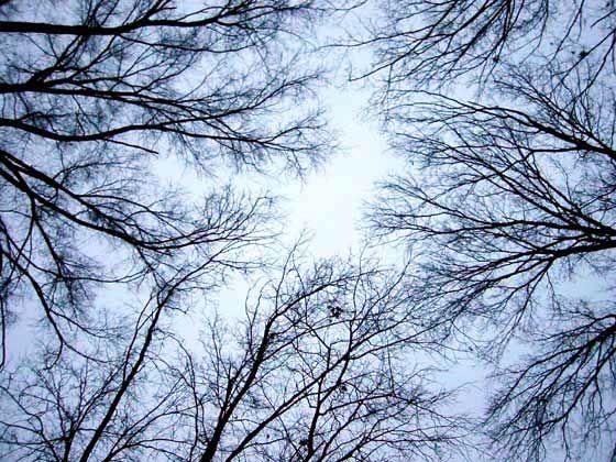 Owensboro Trees